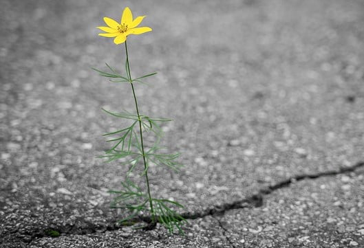 Fleur Résilience Force Vivre à coup de coeur