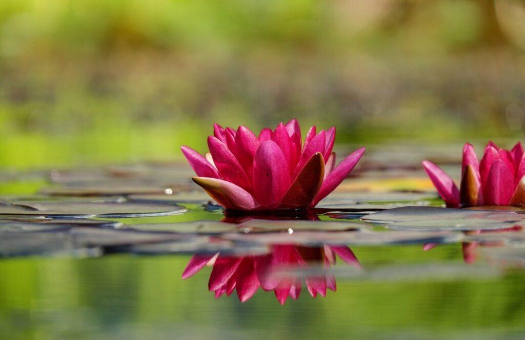 miroir, reflet, accompagnement, Vivre à coup de cœur,